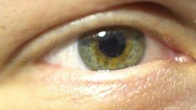 Groen oog extreem close-up van en iris en leerling die uitzetten aangaan Zeer fijn gedetailleerde menselijke anatomie, het knippe stock videobeelden