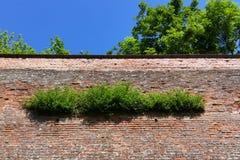 Groen op de oude vestingsmuur Stock Foto