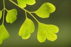 Groen op groen royalty-vrije stock afbeelding