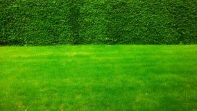 Groen op groen: het gras ontmoet haag Stock Afbeelding