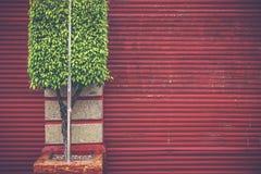 Groen op rood Stock Foto's