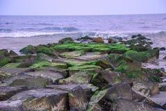 Groen op rotsen op de Atlantische Oceaan stock afbeelding