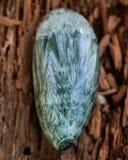 Groen opgepoetst Seraphinite-specimen van Oostelijk Siberië in Rusland op vezelige boomschors Gemkwaliteit clinochlore van stock foto