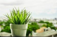 Groen organisch tarwegras tegen Royalty-vrije Stock Fotografie