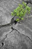 Groen over droog land Stock Fotografie