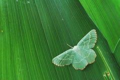 Groen over groen Stock Foto's