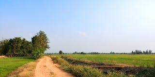 Groen padieveld stock foto