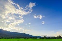 Groen Padieveld met Bergenachtergrond onder Blauwe Hemel Royalty-vrije Stock Fotografie
