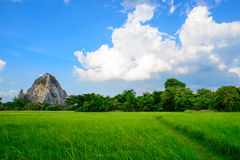 Groen padieveld met blauwe hemel Stock Afbeeldingen