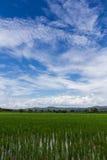 Groen padieveld met schoonheidshemel in Thailand Royalty-vrije Stock Fotografie
