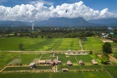 Groen padieveld op berg met mist in Chiang Mai Stock Fotografie