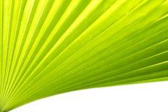 Groen palmblad Royalty-vrije Stock Afbeeldingen