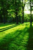 Groen park Stock Foto's