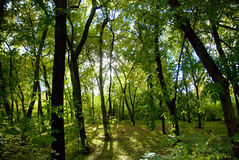 Groen park royalty-vrije stock foto's