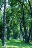 Groen park Stock Fotografie