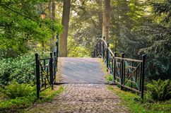 Groen park in de ochtend Royalty-vrije Stock Afbeelding
