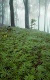 Groen patroon van installaties in een bos met mist Royalty-vrije Stock Fotografie