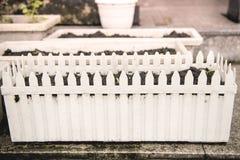 Groen plan op witte potten en in macromening Stock Foto