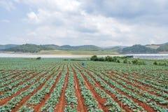 Groen plantaardig gebied stock afbeelding