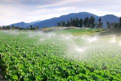 Groen plantaardig landbouwbedrijf. royalty-vrije stock afbeeldingen