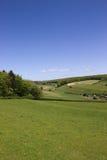 Groen platteland Stock Afbeeldingen