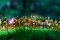 Groen pluizig mos royalty-vrije stock afbeeldingen