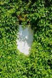 Groen raamkozijn stock foto's