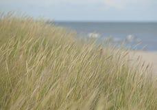 Groen riet op beach.GN royalty-vrije stock afbeelding