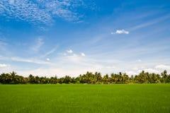 Groen rijstlandbouwbedrijf Stock Afbeelding
