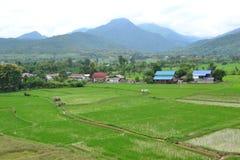 Groen rijstlandbouwbedrijf in Nan royalty-vrije stock afbeeldingen