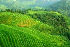 Groen rijstterras in mountaines van China royalty-vrije stock afbeeldingen