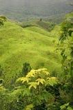 Groen rollend landschap Royalty-vrije Stock Afbeeldingen