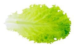 Groen slablad op wit geïsoleerde achtergrond Stock Afbeelding
