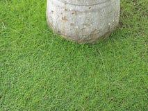 Groen tapijt van klaver rond boomstam stock foto