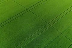 Groen tarwegebied als achtergrond Stock Fotografie