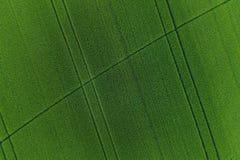 Groen tarwegebied als achtergrond Stock Afbeelding