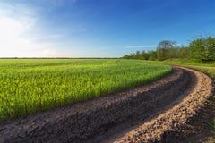 Groen tarwegebied dichtbij irrigatiekanaal royalty-vrije stock afbeeldingen