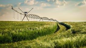 Groen Tarwegebied met Irrigatiesysteem stock foto