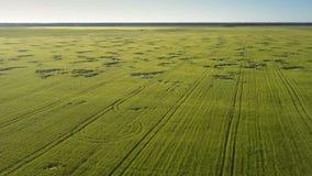 Groen tarwegebied tegen dicht bos op horizonantenne stock video