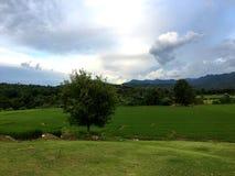 Groen terraspadieveld voor berg onder donkere wolk en hemel royalty-vrije stock foto