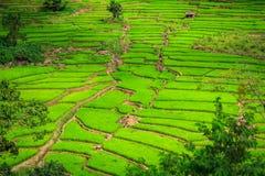 Groen Terrassenpadieveld, een mooie natuurlijke schoonheid op berg in Nan, Khun Nan Rice Terraces, Boklua Nan Province, Thailand Stock Foto