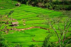 Groen Terrassenpadieveld, een mooie natuurlijke schoonheid op berg in Nan, Khun Nan Rice Terraces, Boklua Nan Province, Thailand Stock Afbeelding