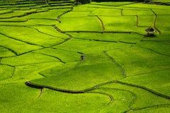 Groen Terrassenpadieveld, een mooie natuurlijke schoonheid op berg in Nan, Khun Nan Rice Terraces, Boklua Nan Province, Thailand Royalty-vrije Stock Afbeeldingen