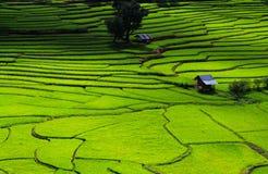 Groen Terrassenpadieveld, een mooie natuurlijke schoonheid op berg in Nan, Khun Nan Rice Terraces, Boklua Nan Province, Thailand Royalty-vrije Stock Afbeelding