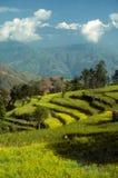 Groen terrasvormig gebied Stock Afbeelding