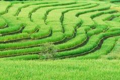 Groen Terrasvormig Padieveld stock fotografie