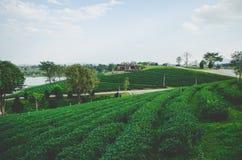 Groen theelandbouwbedrijf met weg met bewolkte hemel stock foto