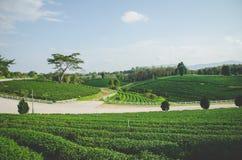 Groen theelandbouwbedrijf met weg royalty-vrije stock fotografie