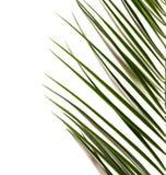 Groen tropisch blad stock foto