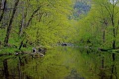 Groen van de lente langs een stille rivier. stock afbeeldingen
